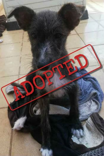 Louise adopted