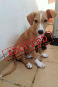 Telma adopted