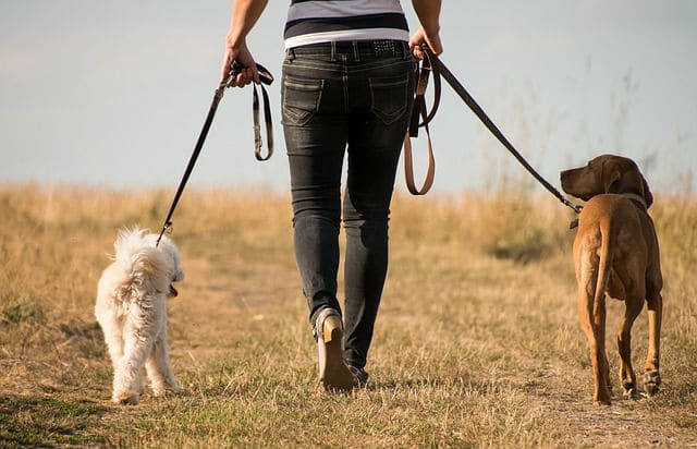 Woman walking two dogs