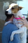 Cindy – female Bodeguero mix in need of a loving home