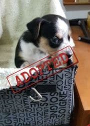 Marley puppy adopted