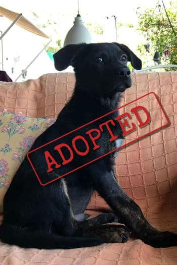 Axl adopted