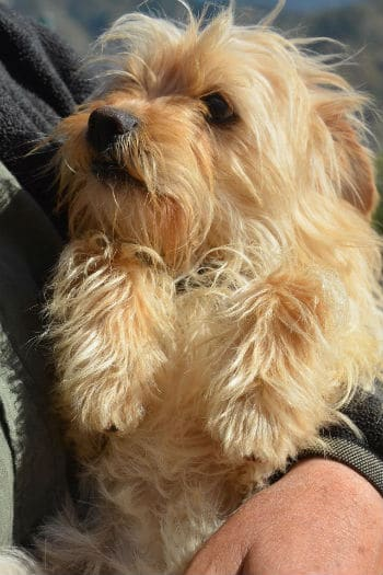 Mickey, male terrier mix is looking for a new home