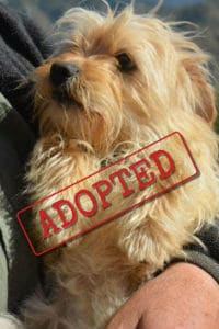 Mickey small terrier mix adopted