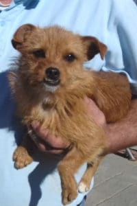 Minnie, female terrier mix seeks home