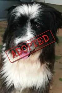Leona adopted