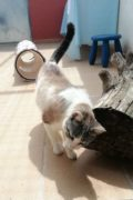 Blondie – beautiful female cat in need of a loving home