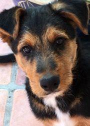Ollie 4