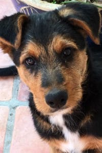 Ollie male terrier mix puppy seeks home