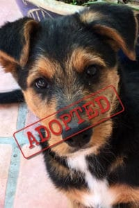 Ollie terrier adopted in UK