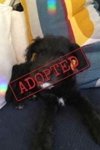 Stan adopted