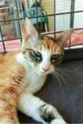 Kelly – friendly female tortoise shell cat seeks a loving home
