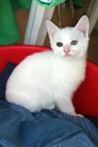 White kitten called Mira
