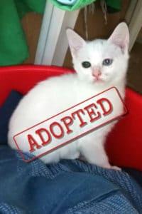 Mira adopted