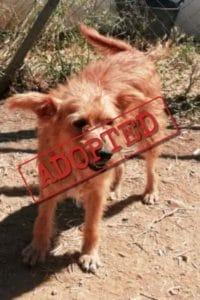 Sandy female dog adopted in UK