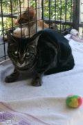 Tina – shy female cat for adoption