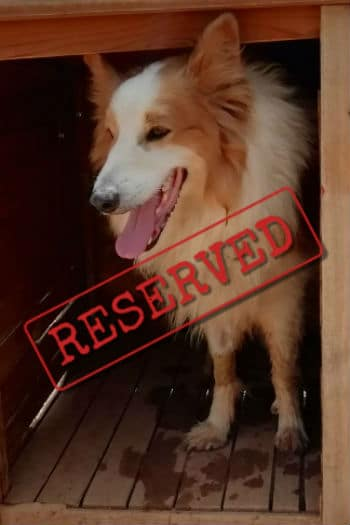 Cosmo reserved