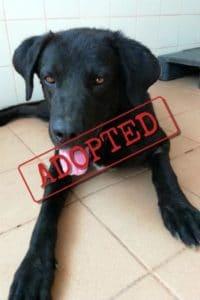 Otis adopted