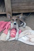 Bailey – young male puppy and siblings looking for a forever home