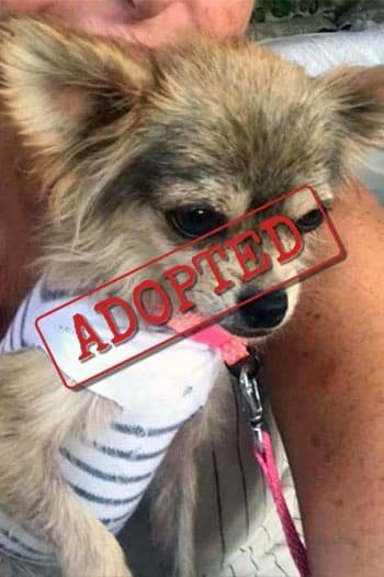 Doris Adopted