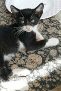 K3 – sweet male kitten for adoption