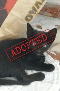 Black kitten adopted