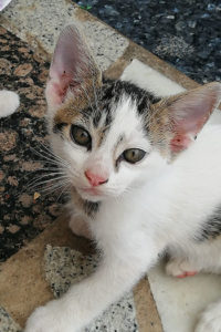 K5 female kitten seeks home