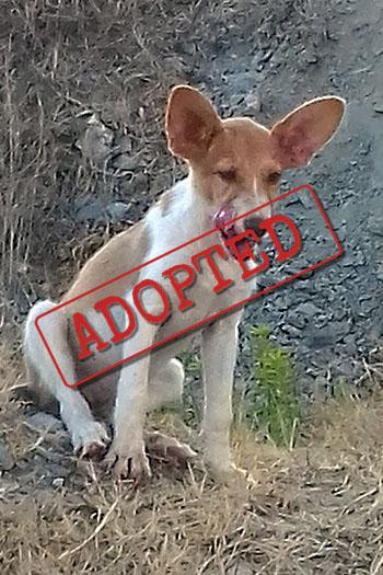 Roxy female dog adopted