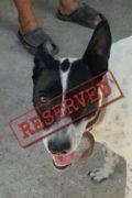 RESERVADO: Tara - una perra amiga busca un hogar amoroso