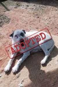 Perro macho Alfi adoptado