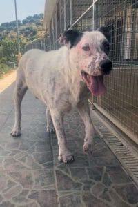 Alfie male dog great character seeks home