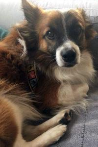 Paco male dog seeks home
