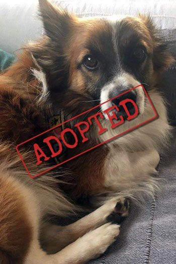 Paco small dog adopted in Germany