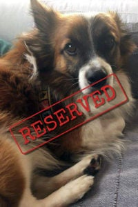Paco reserved