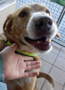 Rey male dog seeks home