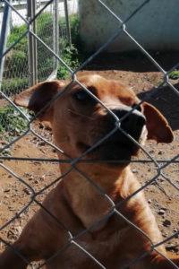 Ramon small male dog seeks home