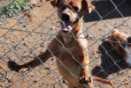 Ramon small male dog seeks home