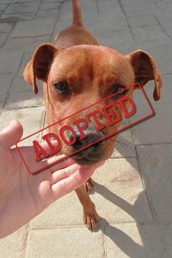 Ramon adopted