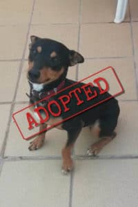 Solo adopted