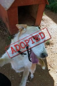 Gracie adopted