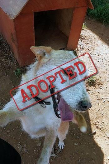 Gracie adoptó