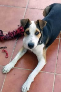 Huckleberry young male dog seeks home