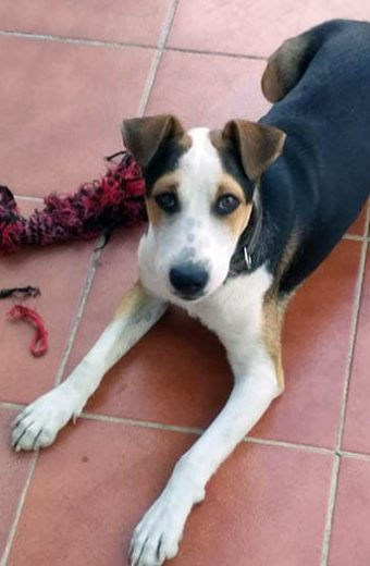 Huckleberry – friendly young male seeks forever home