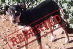 Mia female dog reserved