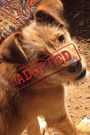 Emily adopted