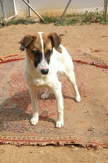Annie young female dog seeks home