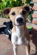 Iggy – male puppy seeks home