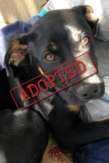 Lily adopted