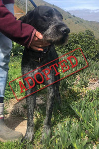 Pasher adopted