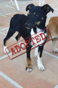 Snoopy adopted